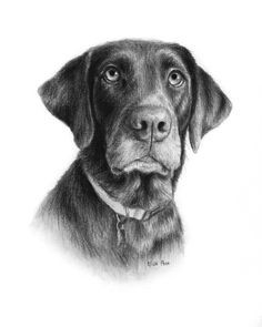 dog portrait custom pet drawing in charcoal personalized animal portrait of dog dog lover gift from your photo realistic dog portrait