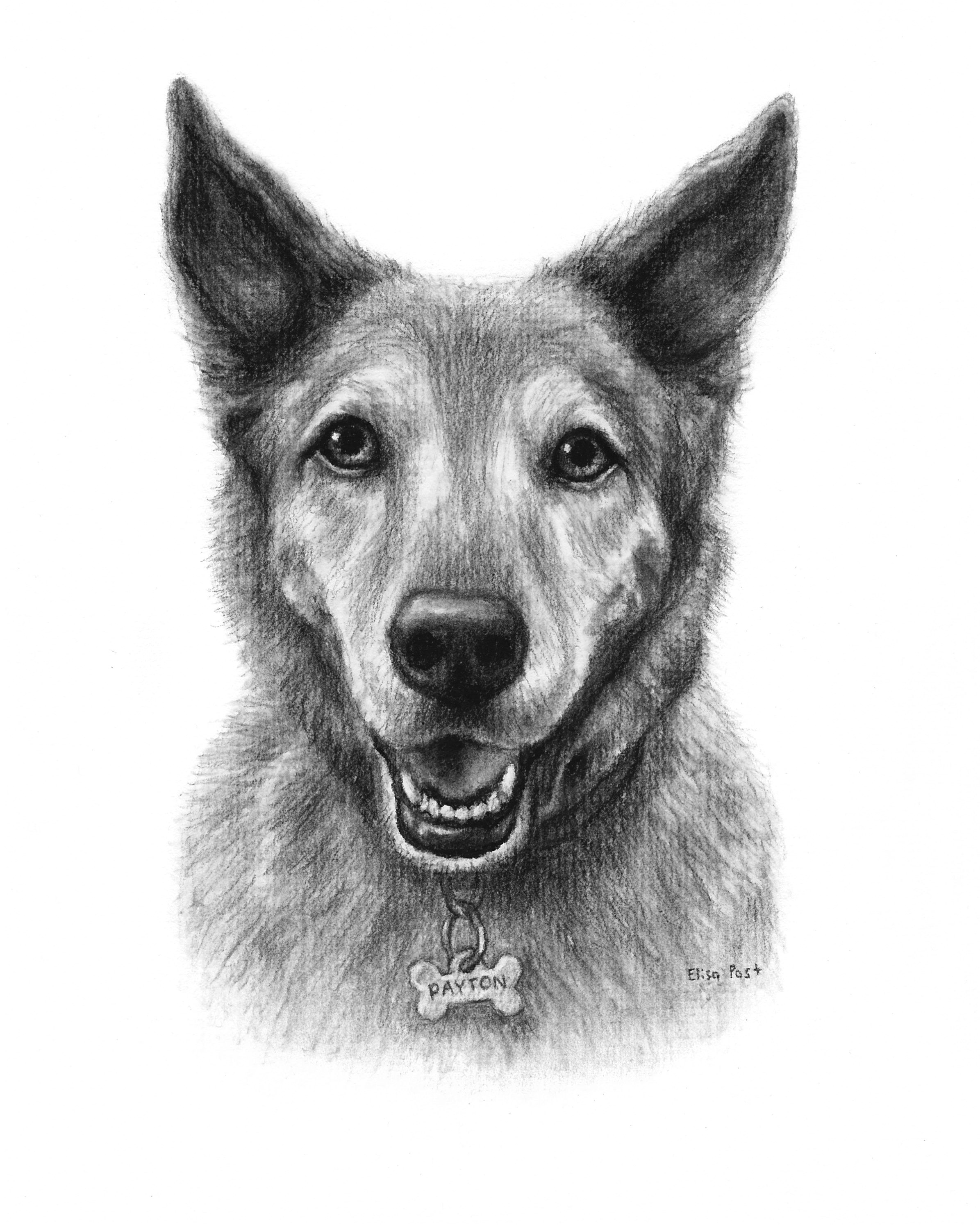 custom dog drawing in charcoal by elisa post view her etsy page here www etsy com shop fineartbyelisa