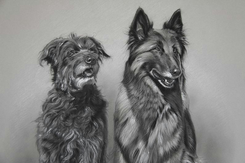 dog art by amy little lola and kira 2014 charcoal on paper