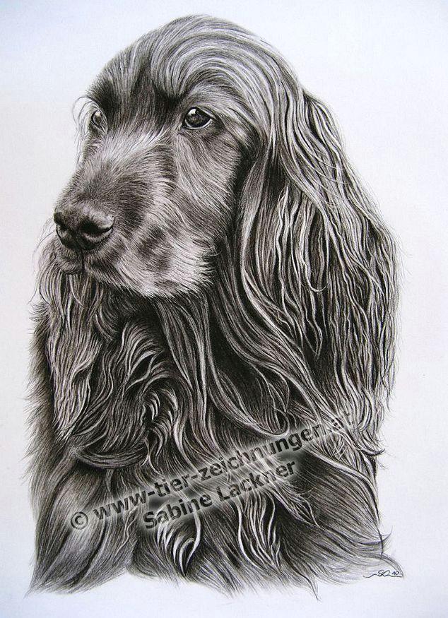 twinkling hundeportrait hundezeichnung in kohle von sabine lackner dogportrait dogpainting in charcoal by sabine lackner tierzeichnung tierportrait
