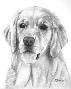 golden retriever drawing goldenretriever golden retriever art golden retrievers animal drawings dog
