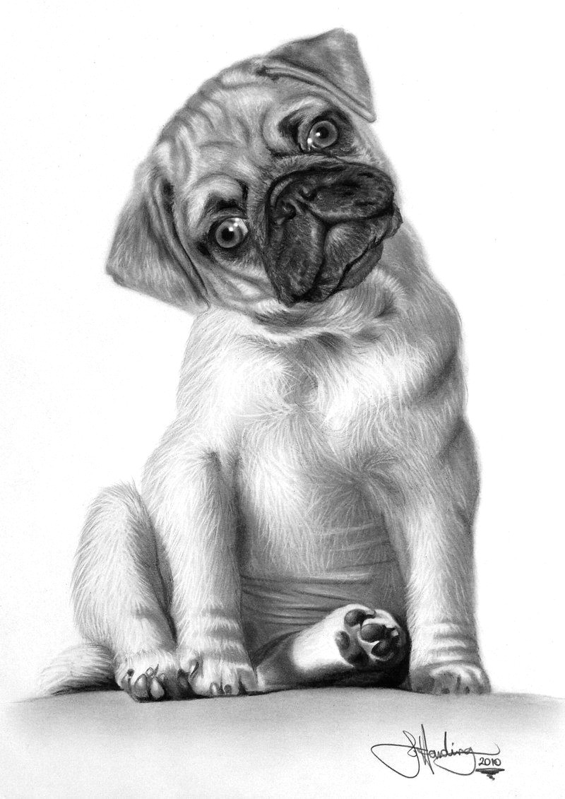 animal art dog pencil drawings
