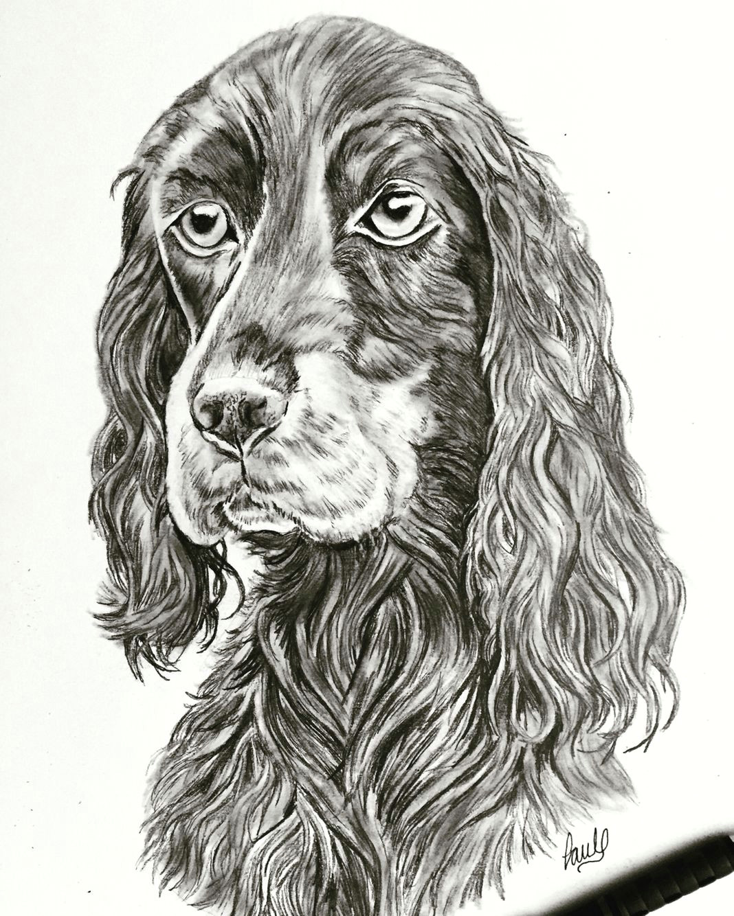 dog sketch done in pencil