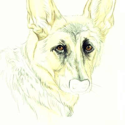how do you draw a beautiful dog using colored pencils