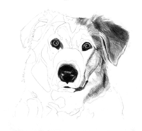 how to draw a dog free graphite art lesson