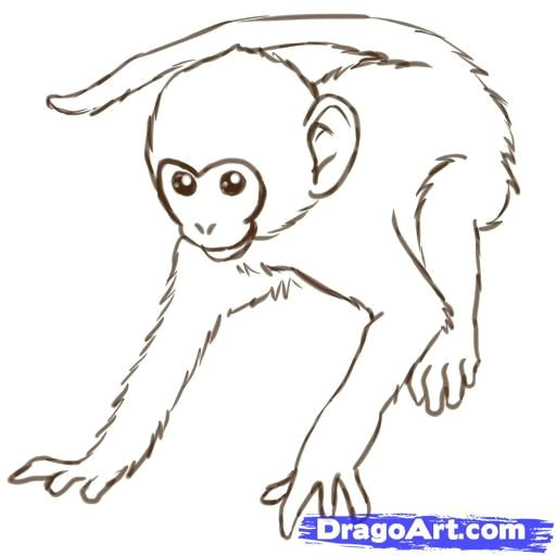 Drawing A Easy Monkey Monkeys Drawings How to Draw Monkeys Step 12 Zeichnen Drawings