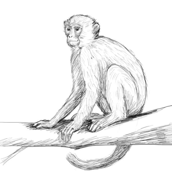 you searched for monkey drawing factory