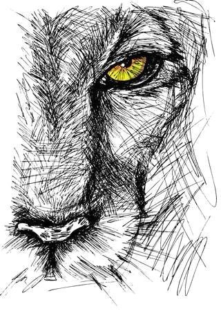 Drawing A Lions Eye Hand Drawn Sketch Of A Lion Looking Intently at the Camera In 2019