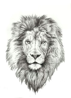 50 best lion tattoo collection