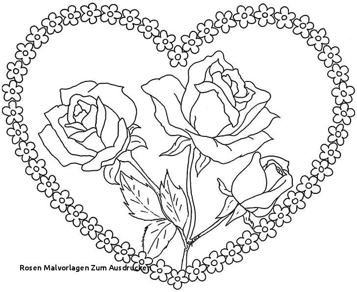 malvorlage rose elegant rosen malvorlagen zum ausdrucken ausmalbilder blumen perfect color bild