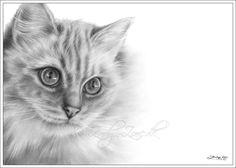 ragdoll cat sadia cute little dogs kinds of cats animal drawings art drawings
