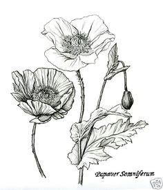 luxury fashion independent designers ssense drawing flowerspoppy