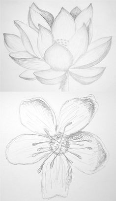 pretty drawings of lotus and cherry blossom gina a art pencil drawings of flowers