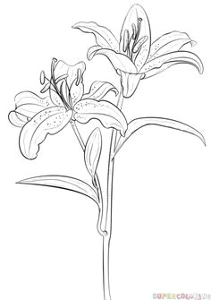 how to draw tiger lily step by step drawing tutorials for kids and beginners flower