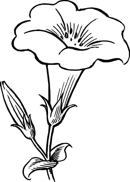 black outline drawing flower white flowers free