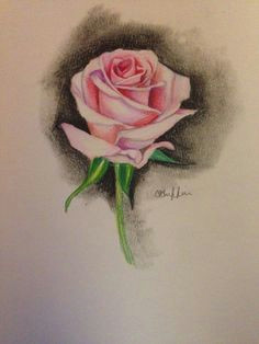 rose sketch rose sketch sketch 2 rose drawings drawing sketches pencil drawings
