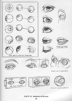 character design collection eyes anatomy anatomy reference anatomy study eye anatomy anatomy