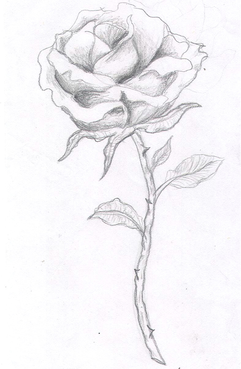 single rose tattoos rose tattoos for men tattoos for guys cool tattoos