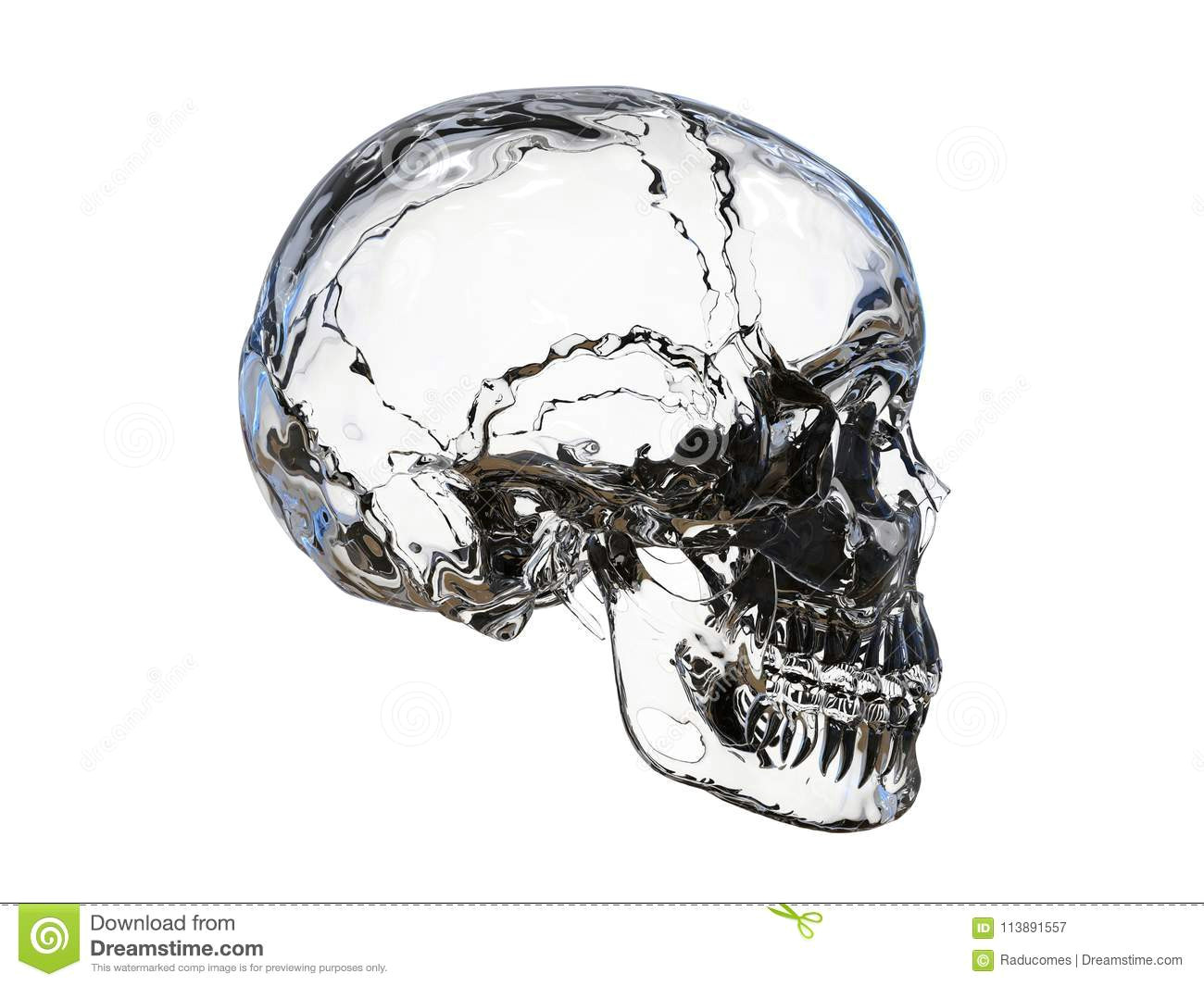 3d render illustration of the side view of a glass human skull the composition is isolated on a white background without shadows