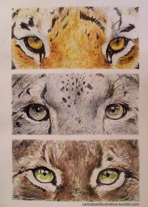 anime lynx and tiger eyes of wild cats siberian tiger snow leopard eurasian lynx