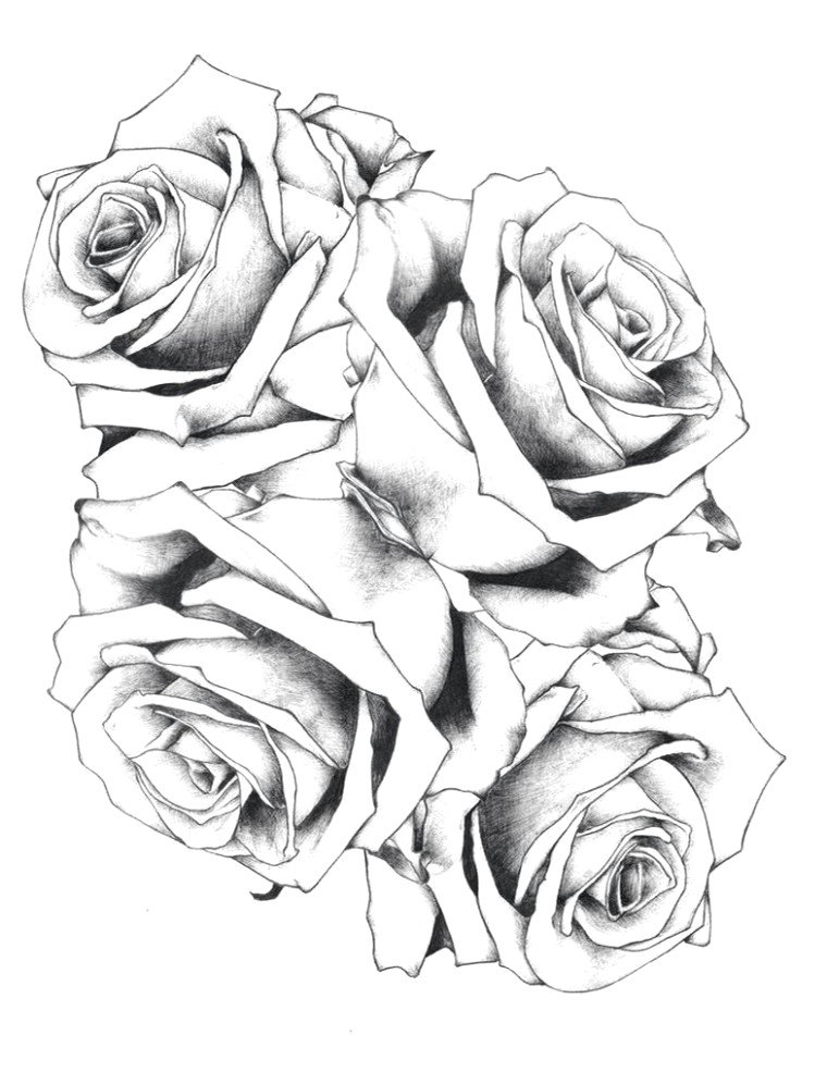 rose drawing unique nature wallpaper sketch beautiful index collaboration 0 0d