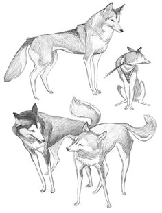 i love the lines in this concept sketches by tiffany prothero animal sketches animal