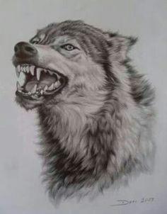 wolf tattoos animal tattoos wolf sketch arte legal animal drawings pencil