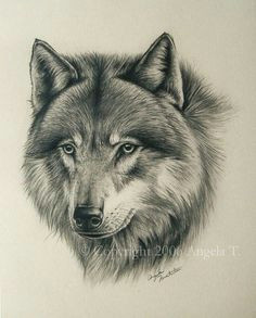 wolf sketch wildlife art pencil art animal sketches animal drawings pencil drawings