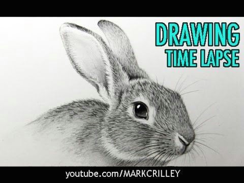 how to draw a rabbit narrated step by step youtube
