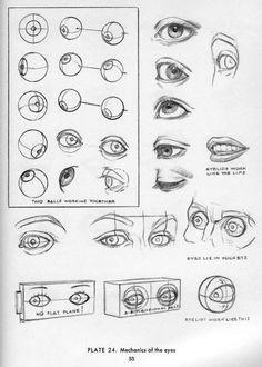 draw eyes eye study howto art anatomy reference anatomy study eye