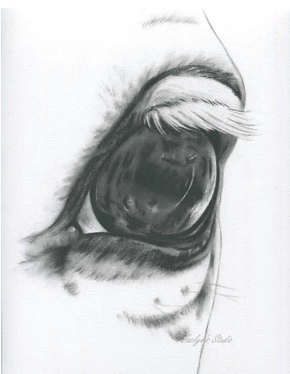 white horse eye horse drawing charcoal eye horse art farm
