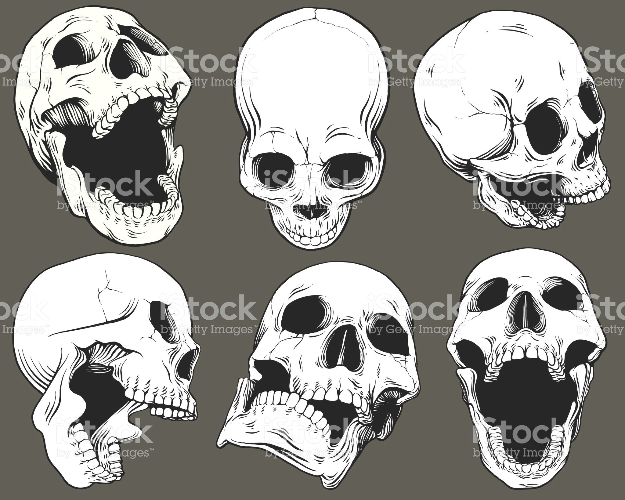 a a a a a a a a a a a a a a a a a a a a a a a aa a a a aa a a a c a a c ae skull reference anatomy reference