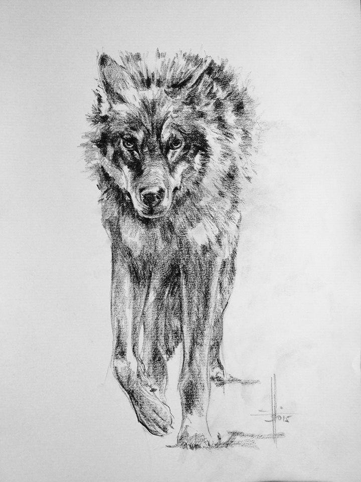 dibujo lobo carba n sobre canson a3 tattoo designs wolf pencil pencil drawings