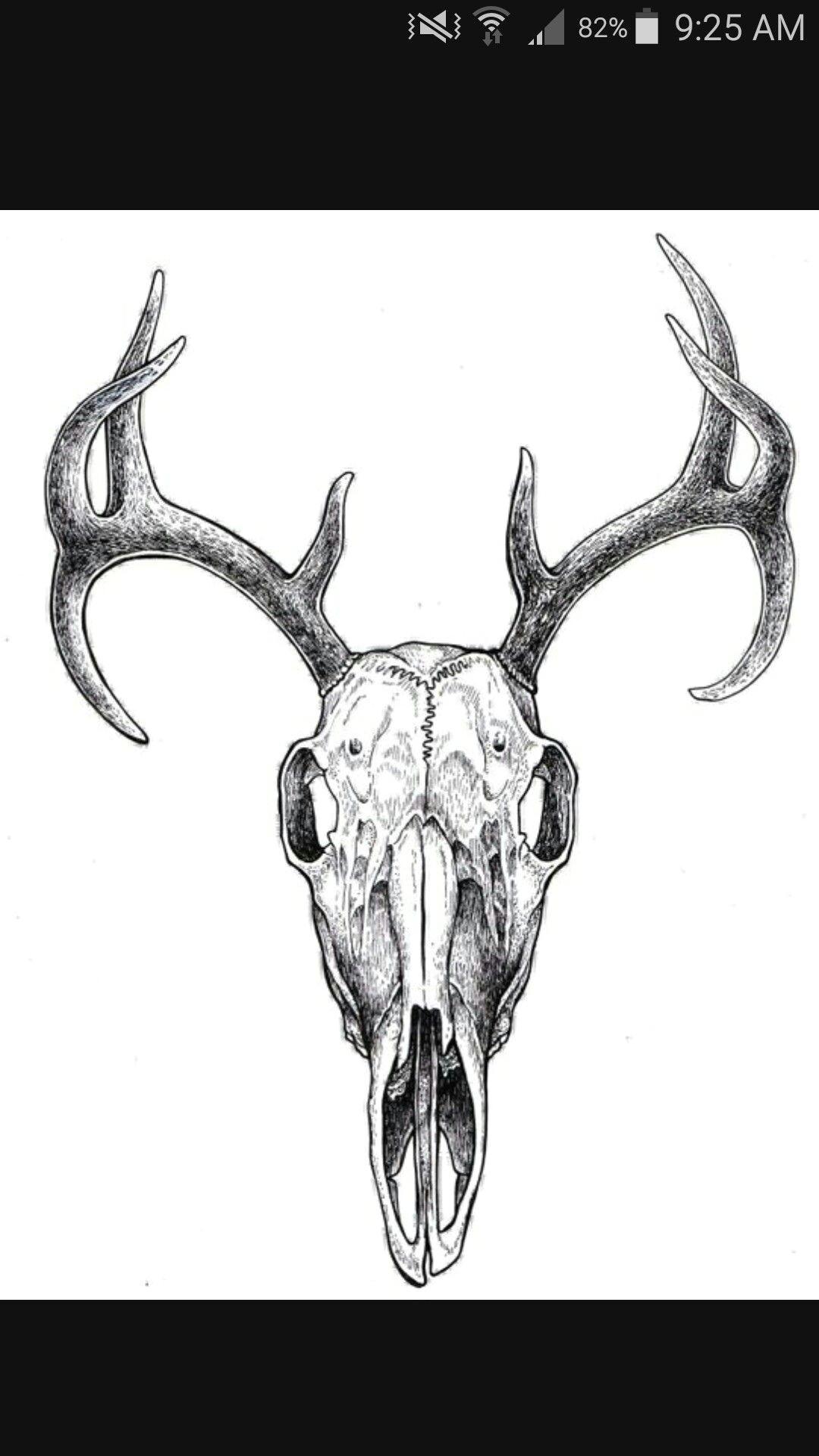 deer skull drawing skull art deer tattoo deer antler tattoos animal skulls