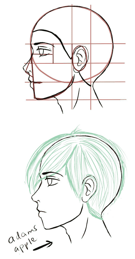 also the male may show an adams apple in the neck when looked at from the side manga side face drawing