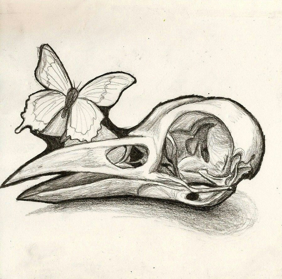 bird skull instead of human like the idea of a butterfly and or bee on it