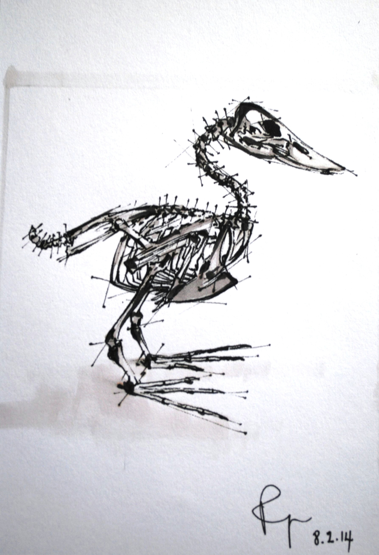 skeleton art anatomy bird skeleton anatomy skeleton art anatomy drawing
