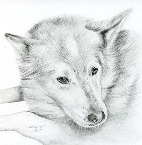 Drawing Black Dogs Custom Pencil Cat Sketch Size 4 X 4 or 5 X 5 Pet Portrait Cat