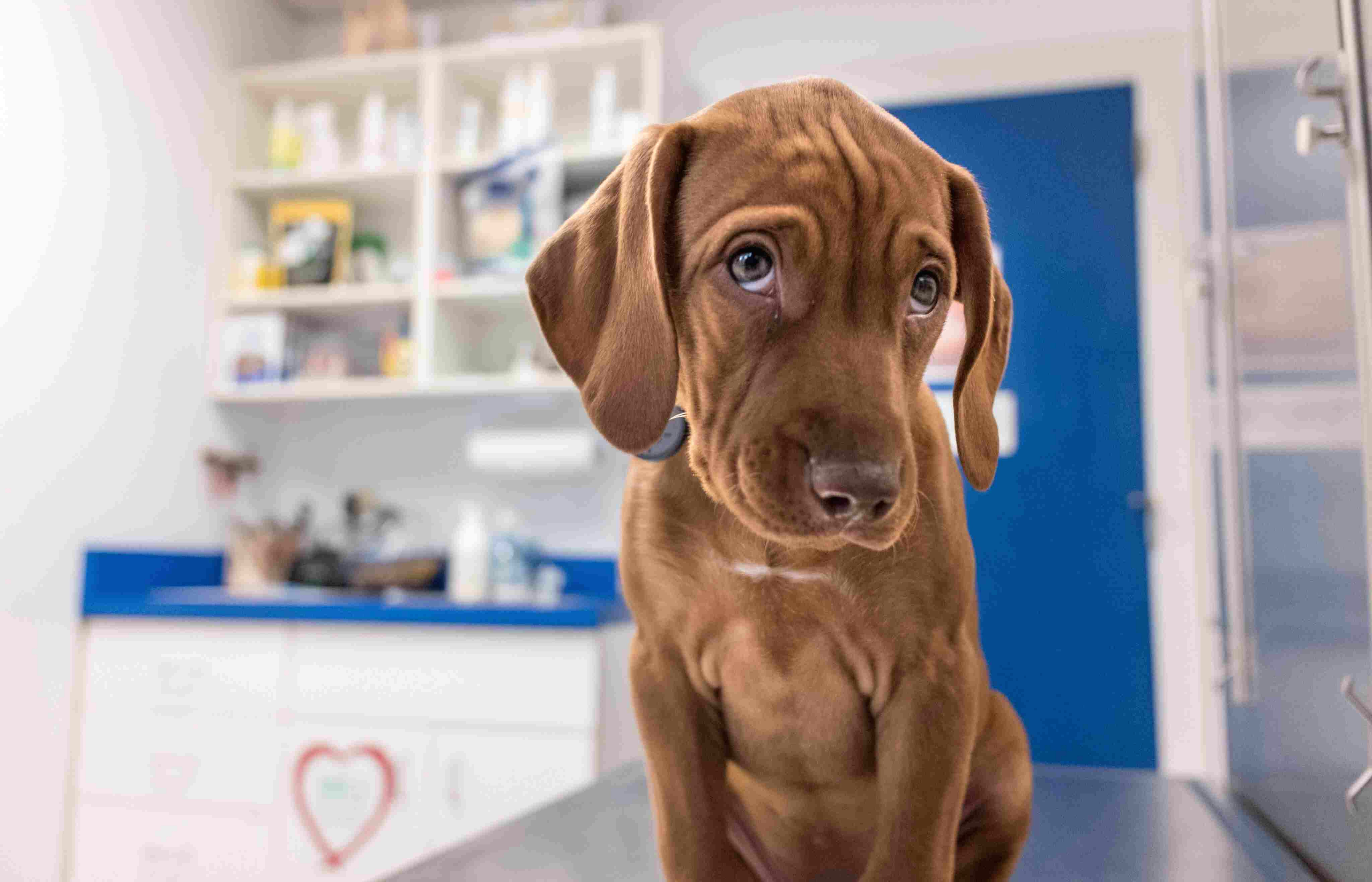 dog in a vet s office