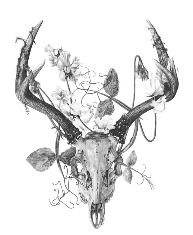 deer skull tattoos deer skulls deer skull drawing animal skulls ram skull