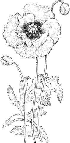 poppy blossom coloring page digi stamps printable flower coloring pages flower colouring pages