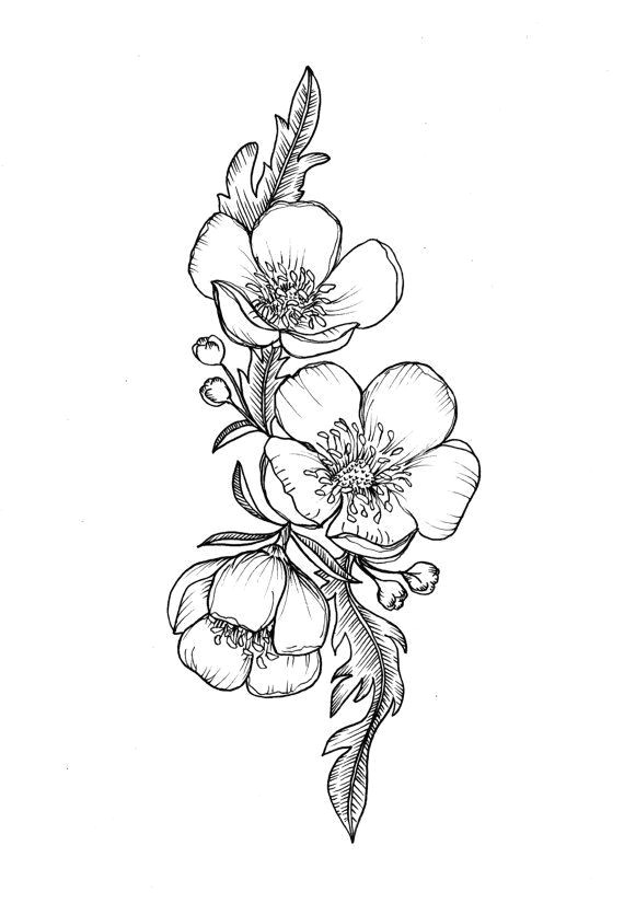 Drawing buttercup Flowers Custom buttercup Illustration Tattoo for Greer by themintgardener
