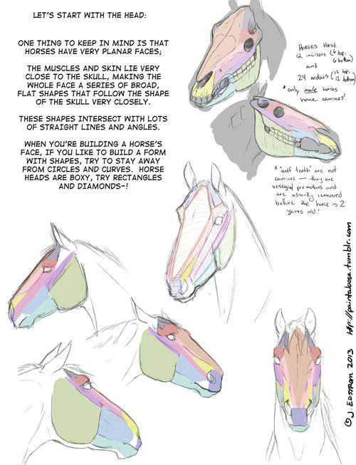 drawing art draw animal skeleton anatomy horse reference tutorial equine horses references skeletal