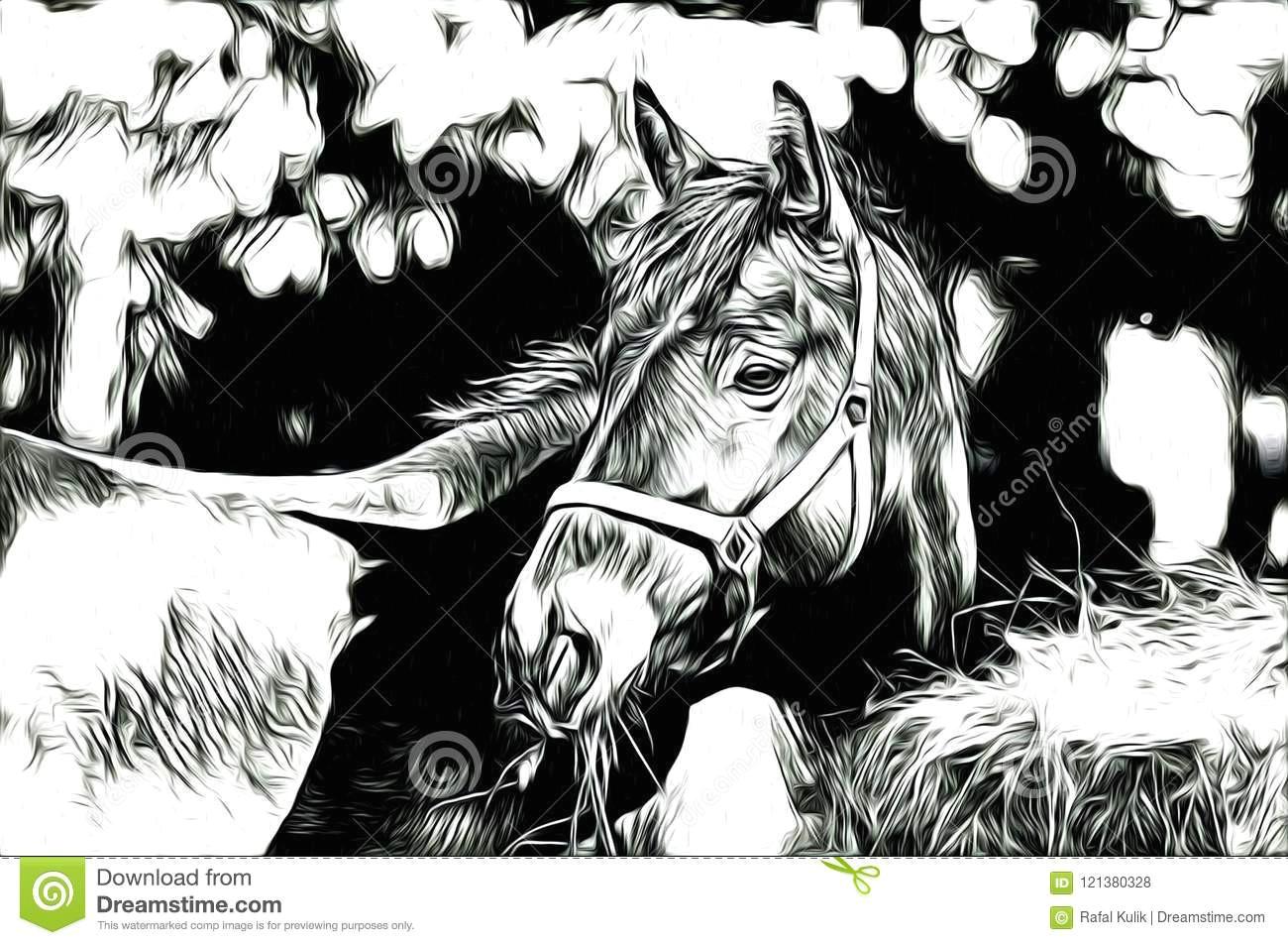 ffreehand horse head art design design illustration good for any design a very funny illustration