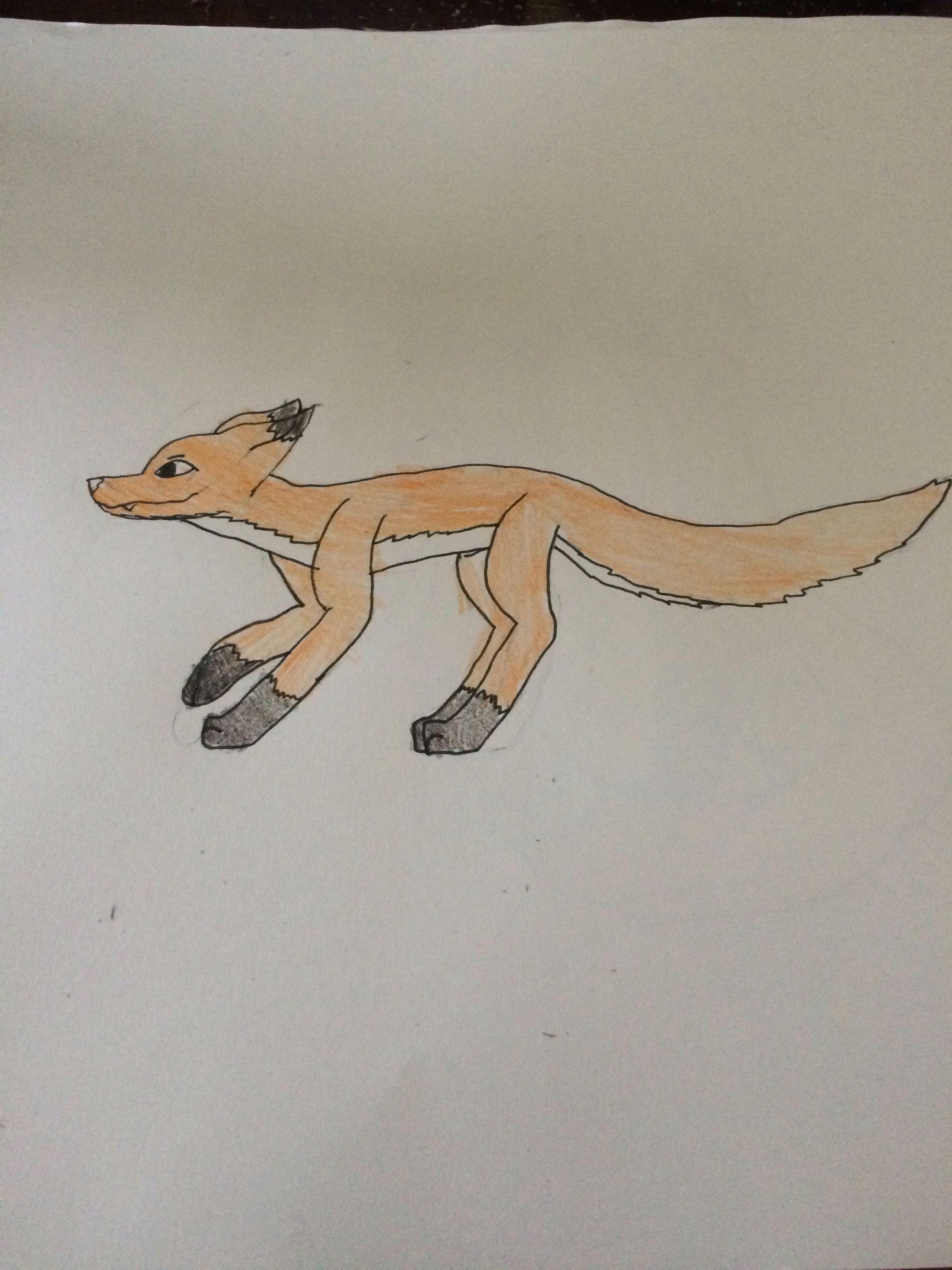fox stalking prey