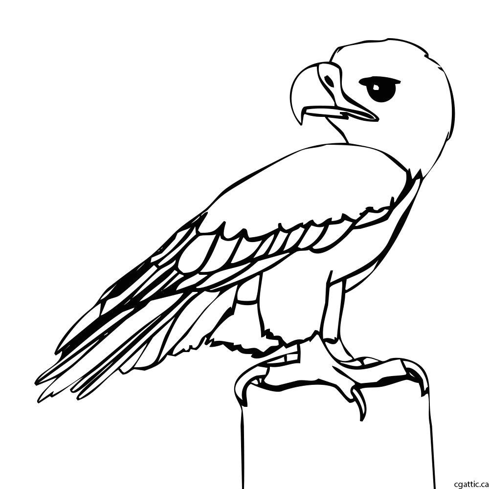 eagle cartoon step 2 refine the sketch into a line drawing