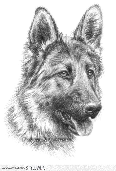 image result for rysunki oa a wkiem zwierza t beautiful places drawings dog artist pencil drawings