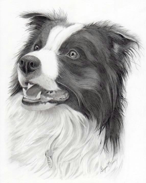 perros border collie border collie art animal drawings pencil drawings art drawings