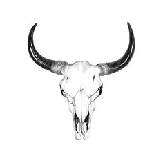 bull skull drawing by john gordon art colored pencil mehr