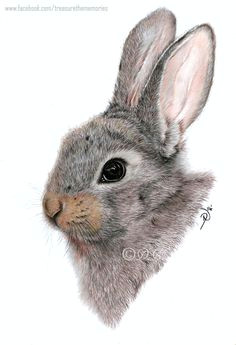 baby bunny a4 coloured pencil